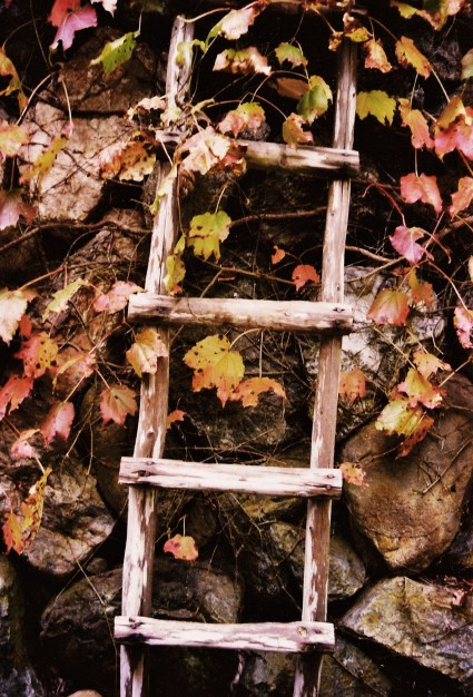 Ladder. Kurama. November 2003.