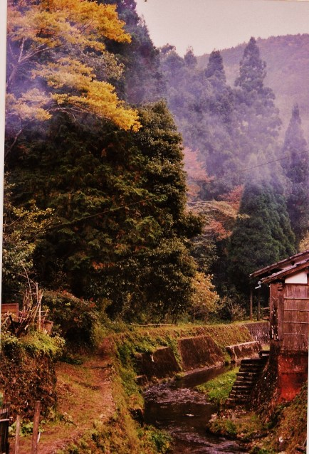 Mist in Kurama.  October 2003.